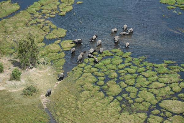 botsuana-familia-de-elefantes-en-el-delta-del-okavango