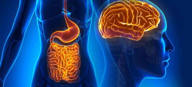 El intestino: ¿Por qué decimos que es nuestro segundo cerebro?
